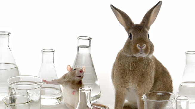 14 Pros and Cons of Animal Research